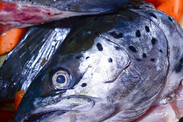 EASY INSTANT POT FISH BROTH